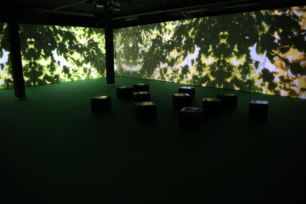 biblioteca degli alberi 3
